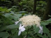 KOGASHI_0703_FLOWER