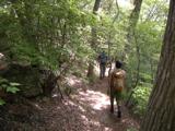 Kogashi120520_trail