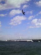 今日は横浜